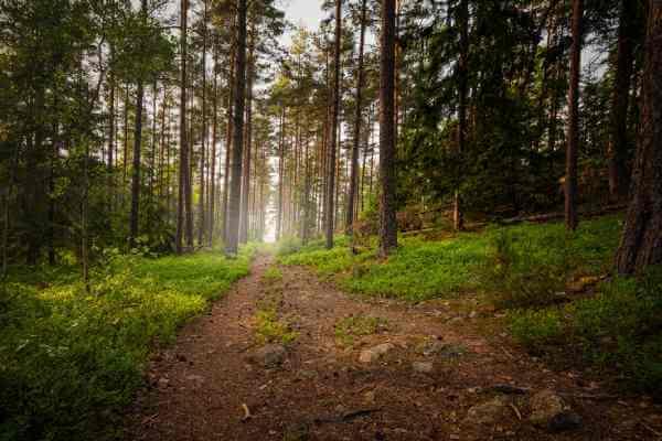 Ett tips är att gå ut i skogen i höst